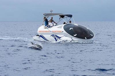Ocean Wildlife Adventure in Oahu