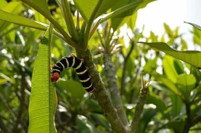 Palm Tree Gardens Botanical Garden in Grenada