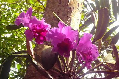 St. Thomas Phantasea Tropical Botanical Garden