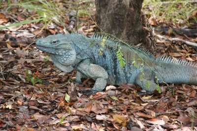 Grand Cayman Queen Elizabeth II Botanic Park