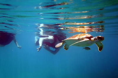 Reef and Turtle Discovery Tour