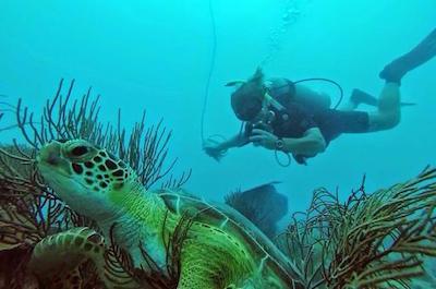 Things To Do In Fajardo - Scuba Diving
