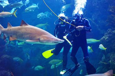 Scuba Diving in Tampa