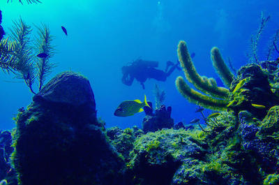 Scuba Diving Tours in Roatan