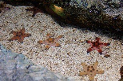 SEA LIFE San Diego Aquarium in San Diego