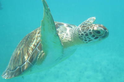 Sea Turtle Snorkel and Nature Walk Tour