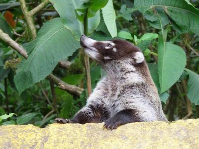 Selvatura Adventure Park in Costa Rica