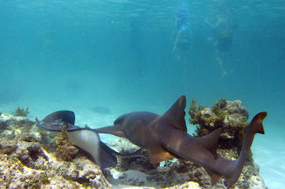 Sharks and Stingrays encounter in Punta Cana