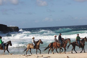 Aruba Excursion: Natural Pool Swim Horseback Riding