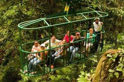 St. Lucia Rainforest