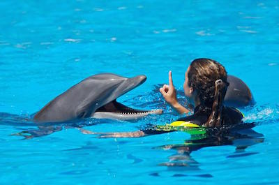 Swimming with dolphins in Cancun