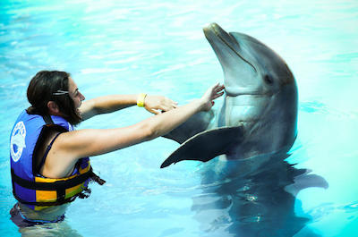 Swimming with dolphins in Puerto Vallarta