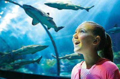 Visit SeaWorld Orlando in Tampa