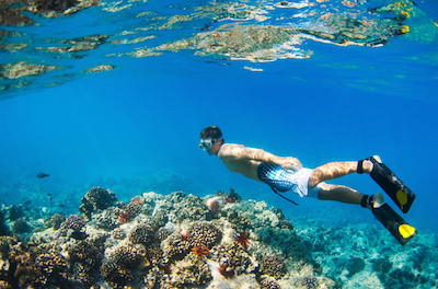 Waianae Coast Snorkel Cruise with Dolphin and Seasonal Whale Watching in Oahu